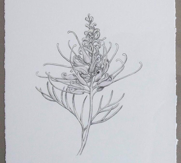 Botanic Illustration