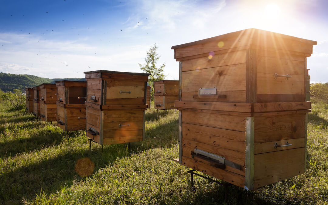 Beginner's Beekeeping
